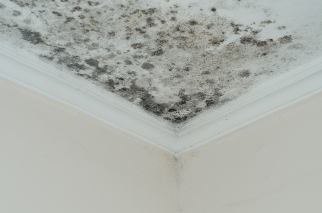 Fungus mold on ceiling